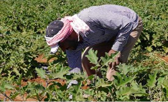 اجتماع يناقش تنمية القطاع الزراعي في محافظة جرش