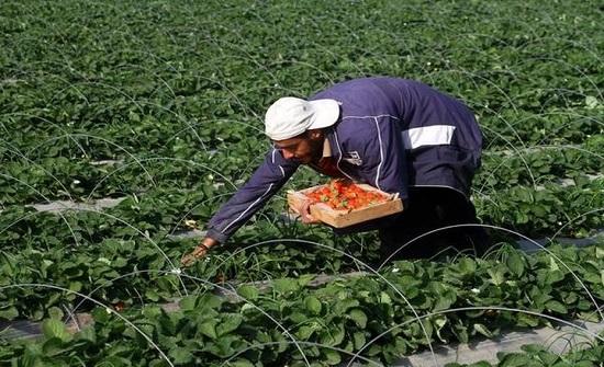 ندوة افتراضية تناقش اثر العدوان الاسرائيلي على القطاع الزراعي في غزة