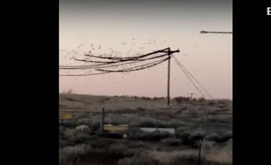 """مئات العصافير """"تحترق"""" على أسلاك الكهرباء... فيديو"""
