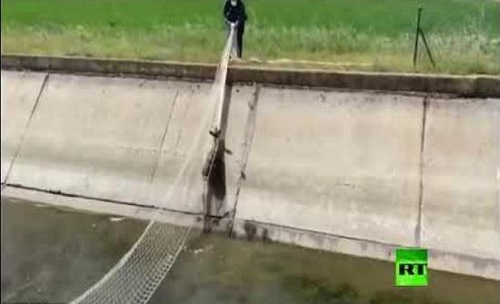 إنقاذ غزال سقط في خندق...فيديو