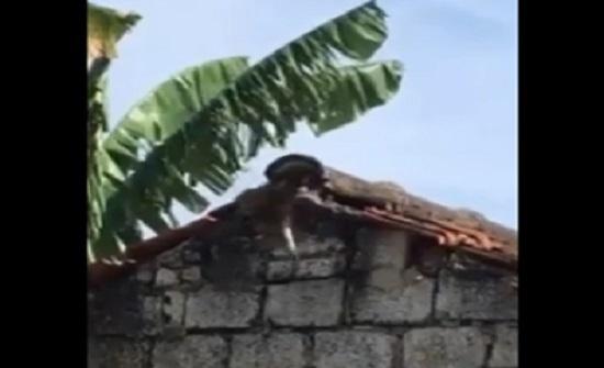 فيديو : مواجهة عنيفة ضد أفعى