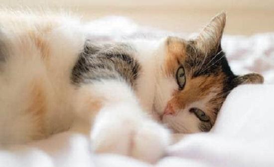 بين الأعراض وسبل العلاج.. ما هي حساسية القطط؟