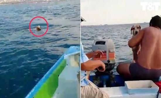 بالفيديو: انقاذ كلبا من موت محقق في عرض البحر في امريكا