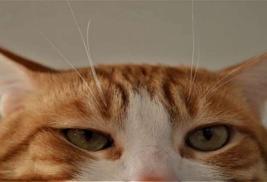 القط 'جيري' يرث 30 ألف يورو!