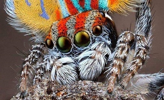 بالصور : حشرات متنوعة وغريبة