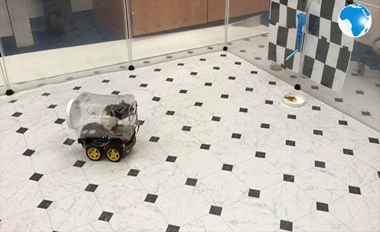 شاهد : تدريب الفئران علي قيادة سيارات صغيرة في امريكا