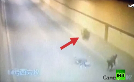 شاهد : عجلة شاحنة تدهس سائق دراجة مرتين في الصين