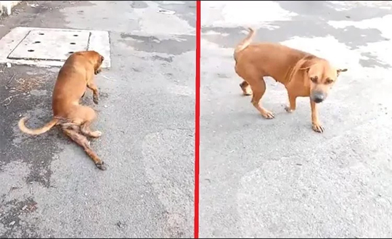 شاهد: كلب يبدع بالتمثيل لجذب انتباه المارة