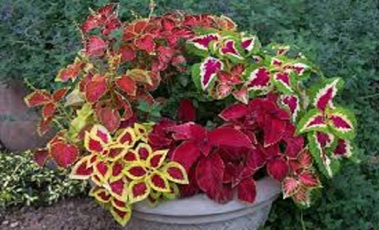 فوائد لنبات السجادة في العلاج الطبيعي ستدهشك