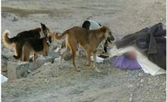 العثور على جثة فتاة حامل نهشتها الكلاب في احد غابات فرنسا