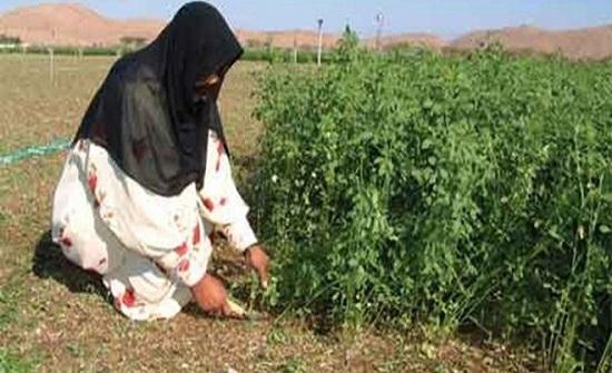 مبادرات تطوعية في إربد للاستثمار بقدرات المرأة الريفية