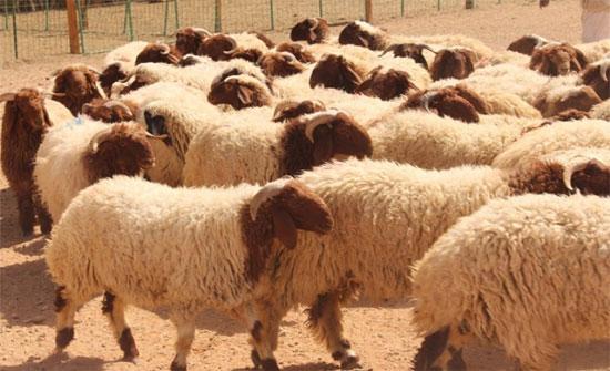 اجتماع يبحث تحديات الثروة الحيوانية بالجيزة
