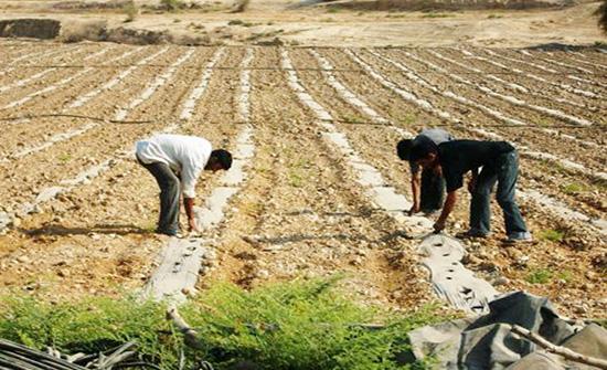 خدام : القطاع الزراعي في خطر