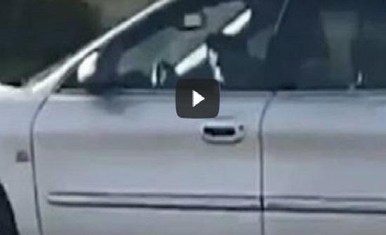 بالفيديو : أمريكا : كلب يقود سيارة لمدة ساعة .. ويرعب السكان
