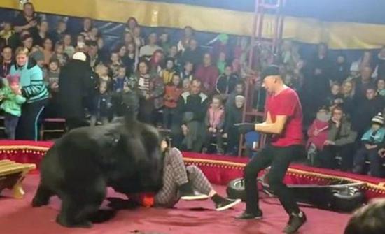 فيديو : دب ضخم يهاجم مدربه الروسي أثناء عرض سيرك