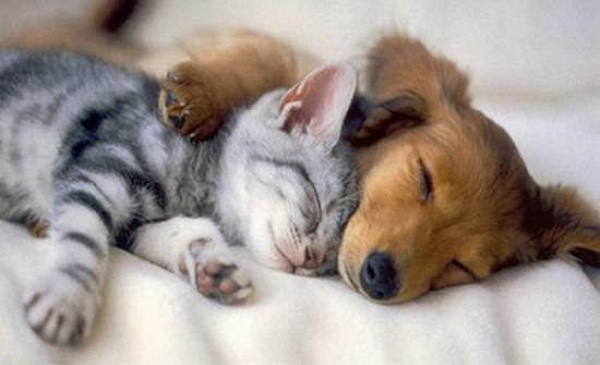 سؤال مُحيّر.. هل تحلم الحيوانات أثناء نومها؟