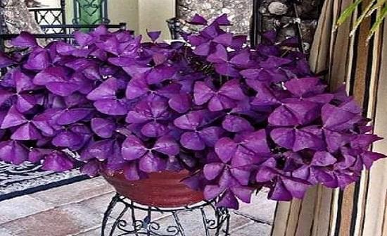 صور : مجموعة من الازهار الجميلة والنادرة