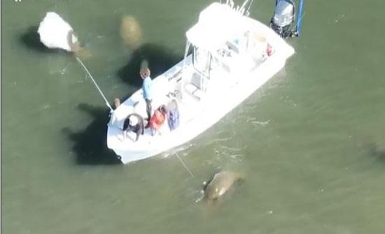 رحلة صيد وسط التماسيح في امريكا .. فيديو