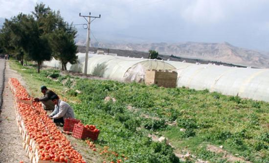 6 مشروعات لزراعة مادبا ضمن مشروعات اللامركزية في المحافظة