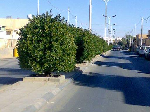 مشاتل أمانة عمان توفر 90% من الأشجار والشجيرات للأعمال الزراعية