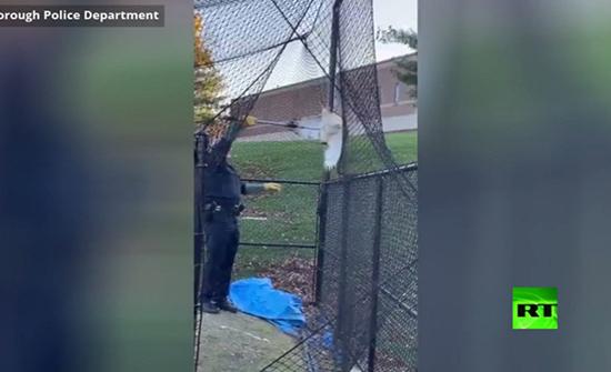 بالفيديو : شرطي ينقذ صقرا كبيرا عالقا في شباك ملعب بامريكا