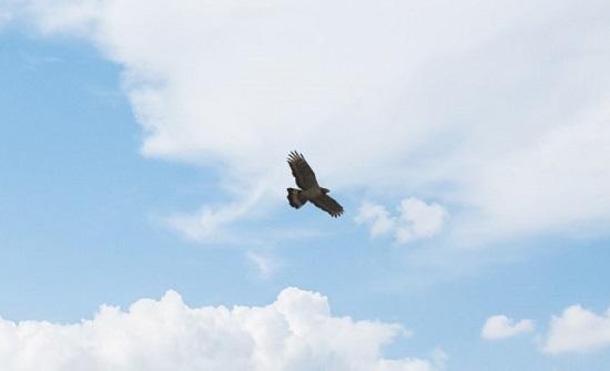 تسجيل طائر نادر جديد في محمية الأزرق المائية