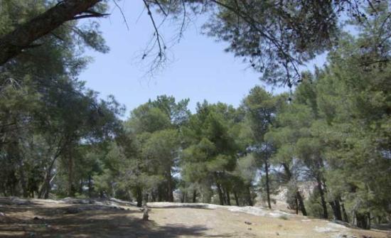 """يوم حقل بعنوان """"زراعة الأشجار الاستوائية في الشونة الشمالية"""""""