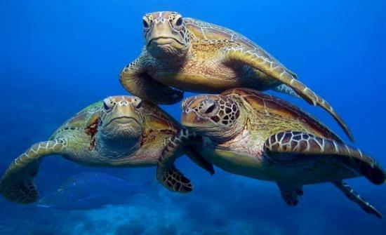 الدولي لصون الطبيعة يدعو لحماية أماكن تعشيش السلاحف