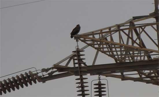 الملكية لحماية الطبيعة: انقطاع الكهرباء بسبب حوادث الطيور نادرة