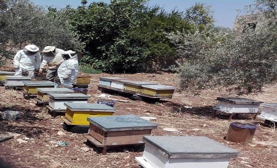 تربية النحل مشروع أسري ناجح ومدر للدخل