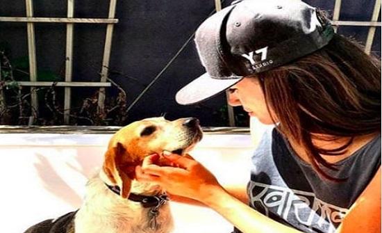 ميغان تتخلى عن كلبها بسبب الأمير هاري