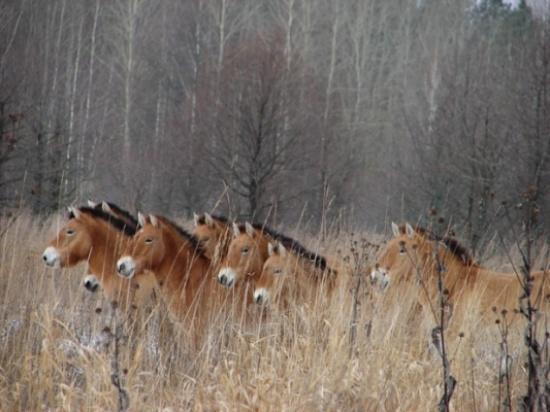 أسبوع الحياة البرية في صور