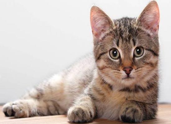 الدفاع المدني ينقذ قطة في عمان  - صور