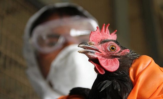 بعد كورونا.. فيروسات تختبئ تحت أجنحة الطيور