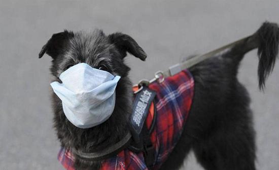 عزل كلب مصاب بكورونا في منطقة حرجية في اربد