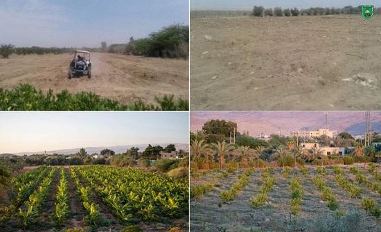"""""""الأردنية"""" تكشف عن إنتاج أول لأراضي الرامة خلال العامين الحالي والمقبل"""