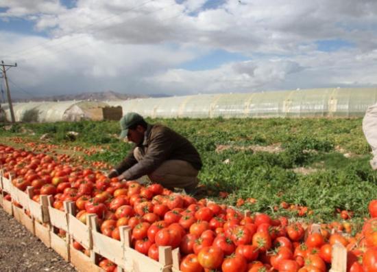 1ر14% انخفاض أسعار المنتجين الزراعيين