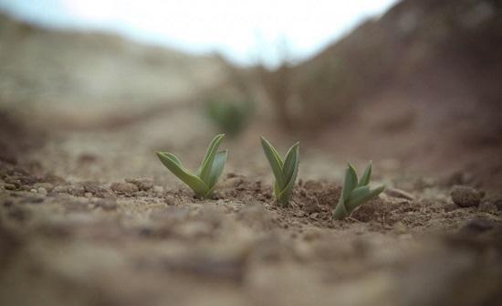 الحكومة تسعى لزيادة الناتج الزراعي بما يزيد عن 20% بحلول 2023