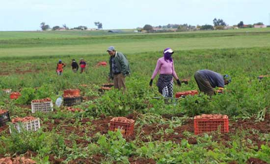 17.6% انخفاض أسعار المنتجين الزراعيين في الربع الأول