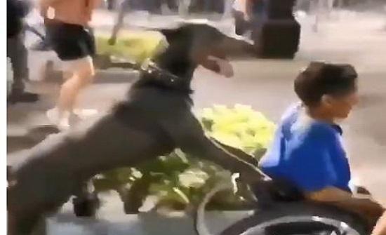 كلب يدفع عربة صاحبه المشارك بمظاهرات امريكا .. شاهد