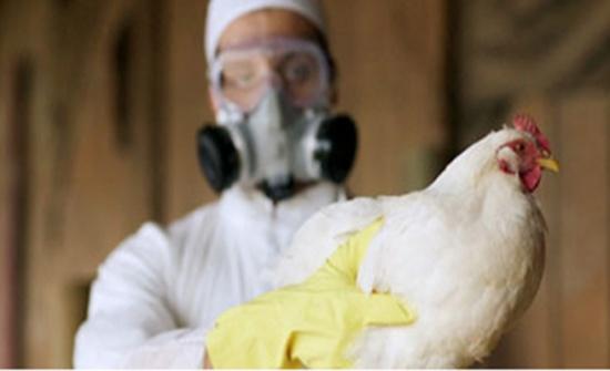 الصين: تفشي انفلونزا الطيور أتش 5 أن 6