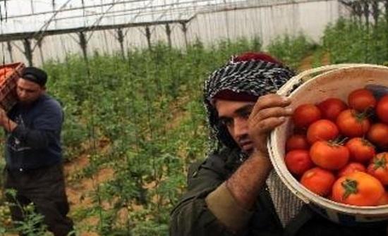 الاحتلال يهاجم مزارع الغزيين بمياه الأمطار