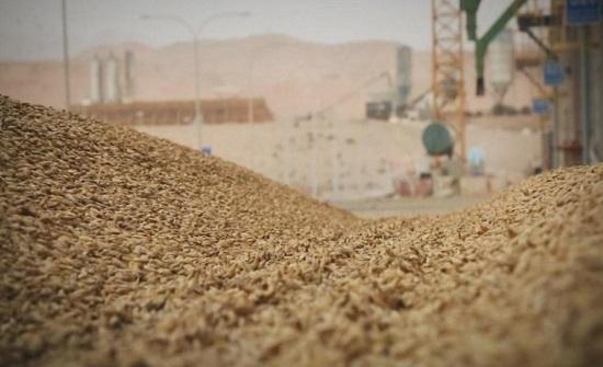 الحكومة تقرر زيادة أسعار شراء القمح والشعير 50 دينارا للطن الواحد