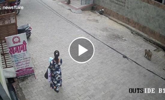 لقطات صادمة للحظة هجوم قرود مشاغبة على المارة (فيديو)