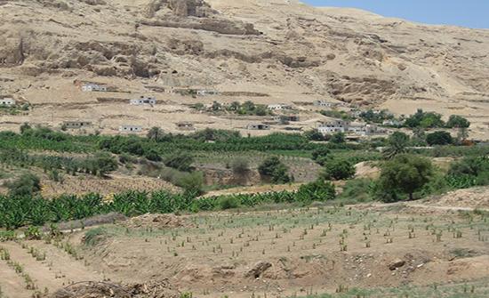 فلسطين: الاحتلال يقتلع 350 شجرة زيتون ويهدم 3 مساكن في أريحا