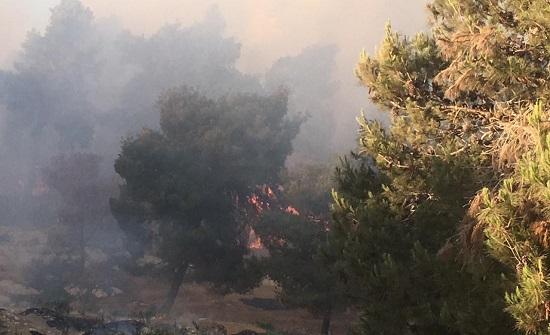 بالصور :  الدفاع المدني يخمد حريقا كبيرا في غابة ياجوز