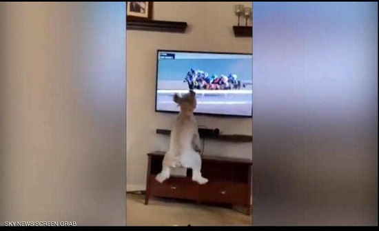 أكثر من مليوني مشاهدة لهذا الكلب لسبب غريب