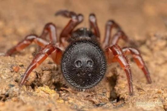 هل حقاً يقضي هذا العنكبوت على الإنسان بأقل من دقيقة؟