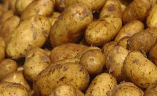 تشكيل لجنة فنية للكشف على البطاطا في اسواق اربد