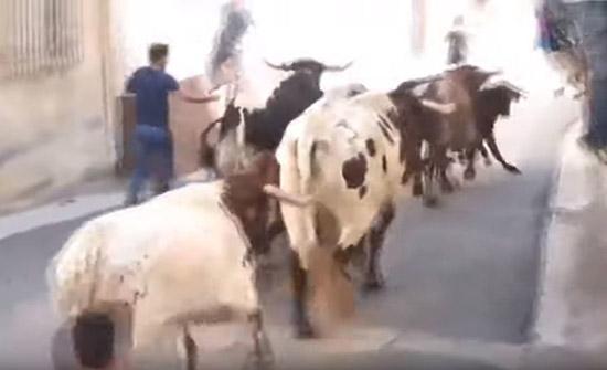 شاهد : رفسة ثور هائج تقطع أنفاس شاب في إسبانيا